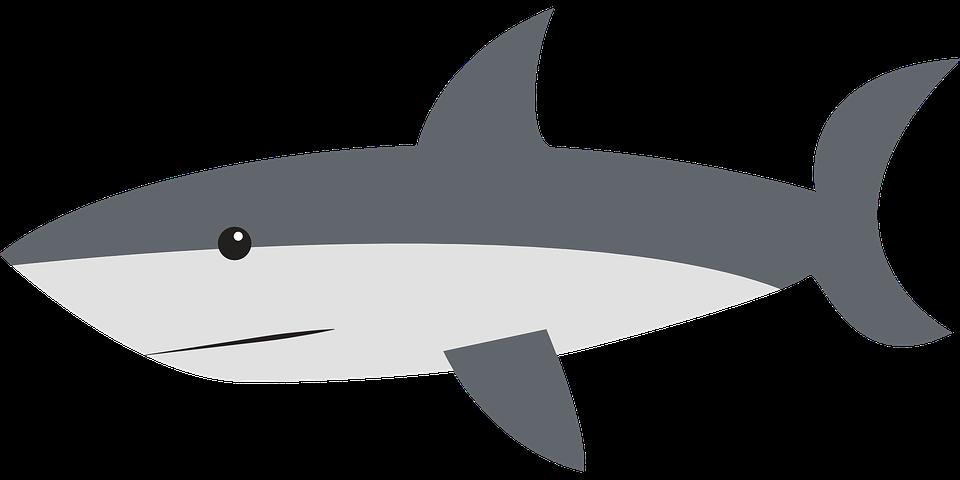 shark fin white background - photo #20