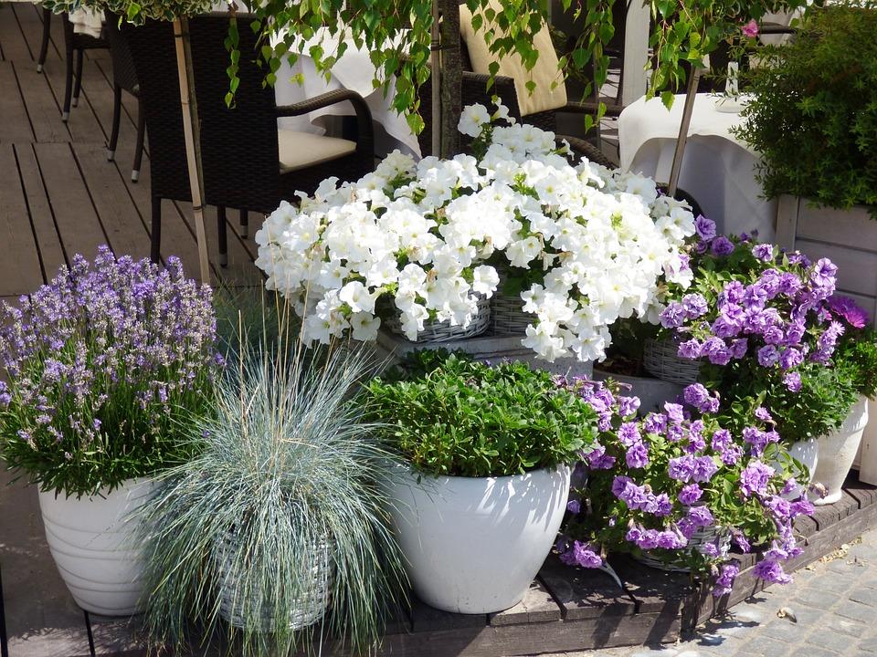 Kwiaty Doniczki Donice Darmowe Zdjęcie Na Pixabay