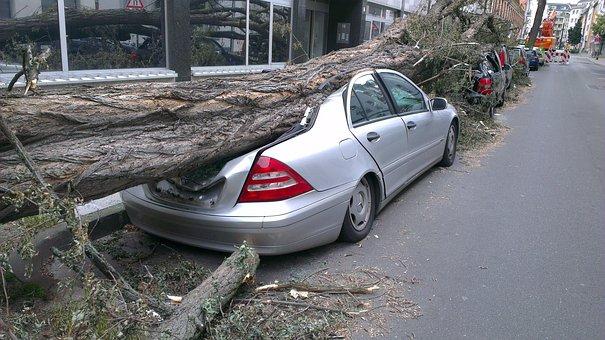Fallen Tree Auto Forward Tornado Damage In