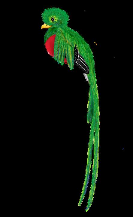 Quetzal Oiseau Des Animaux · Image gratuite sur Pixabay