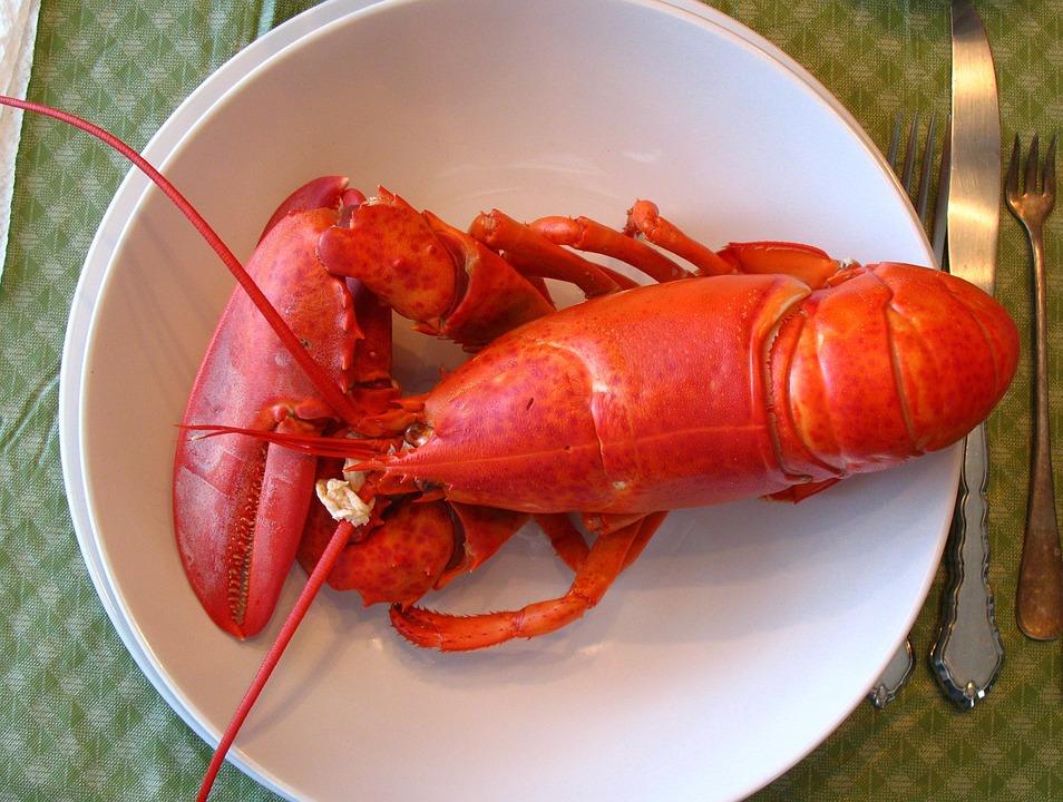 Free photo: Lobster, Maine, Dinner, Seafood - Free Image on Pixabay - 1089140