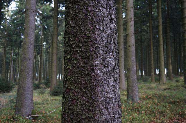 Free Photo Tree Bark Log Wood Spruce Cork Free