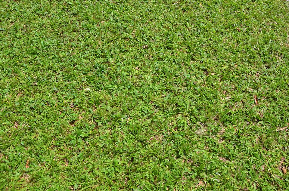 Grass Texture Background Green 183 Free Photo On Pixabay