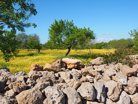 Olivenbaum, Olivenhain, Steinmauer
