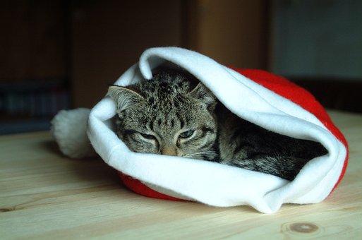 Hat Christmas, Cat, Animal, Cat Eyes