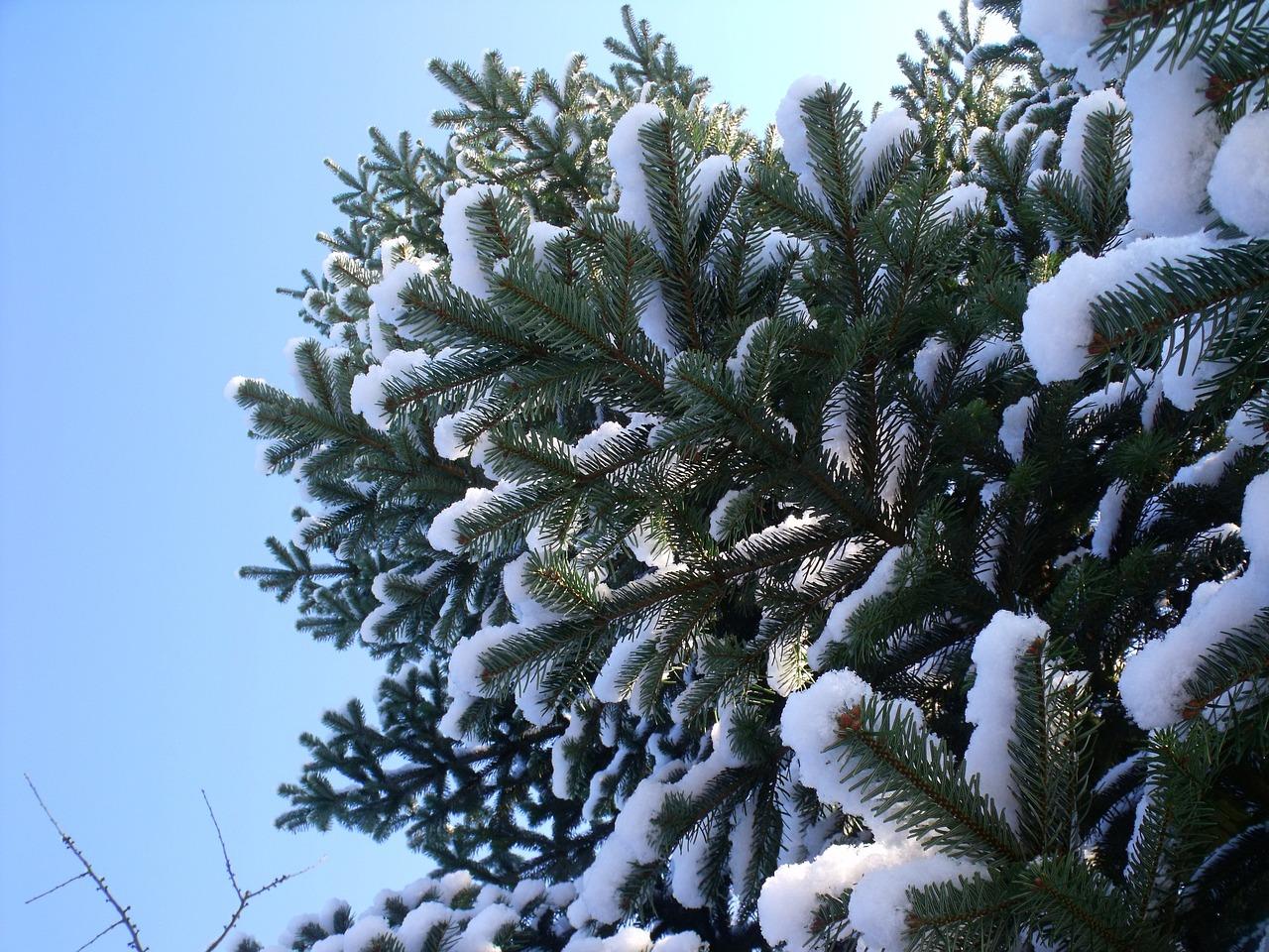 лес покрыт снегом картинки новогодние