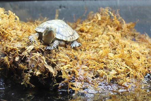 Turtle, Moss, Animal, Nature, Shell