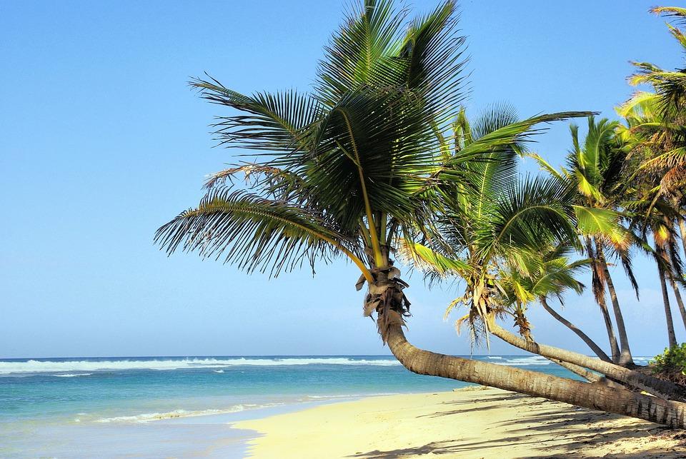 Kuba Pantai Pohon Kelapa Foto Gratis Di Pixabay