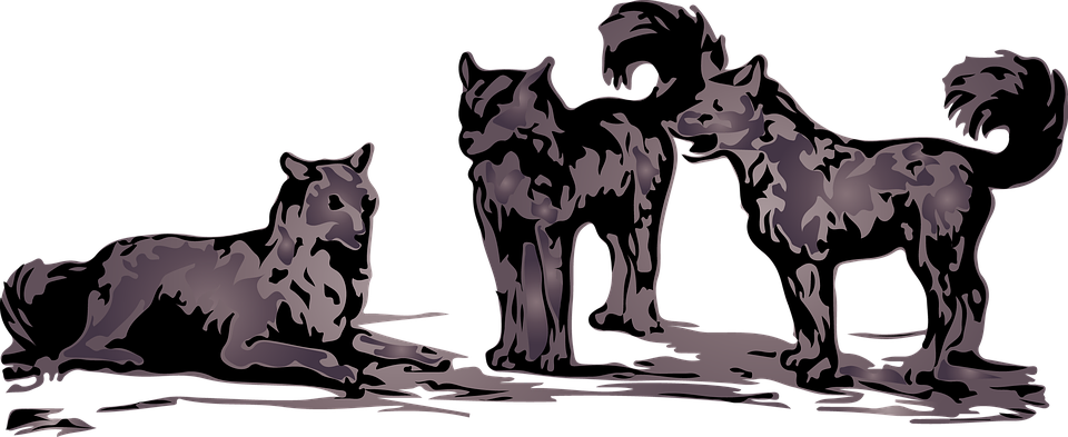 wolves-1093534_960_720.png