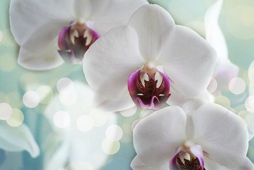 Orchids, White, Flower, Nature, Tropical