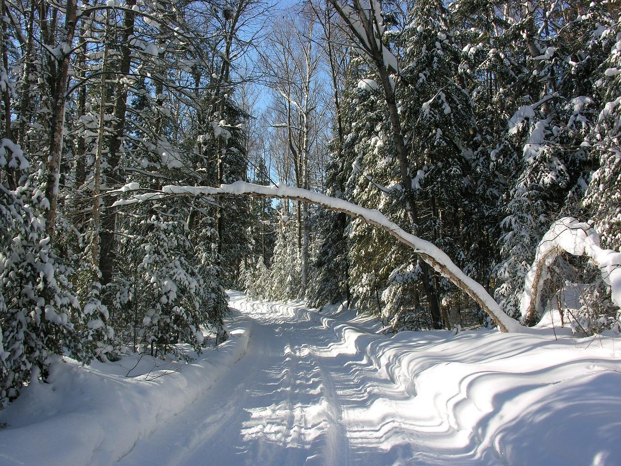 снежная тропинка фото зимние написала красивую