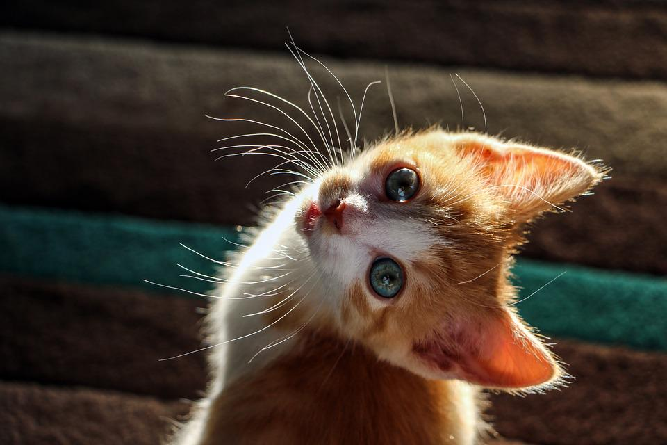 kitten cat cute free photo on pixabay