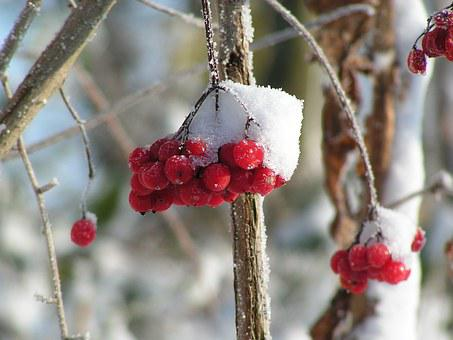 Зимой, Рождество, Снег, Природа
