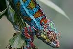 animals, reptile