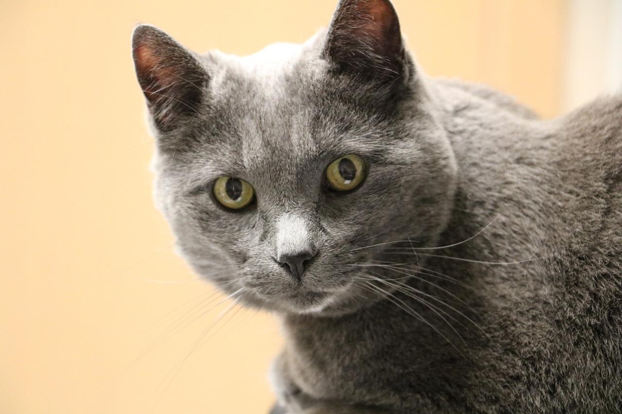 Картинки с котом серым, картинки анимация