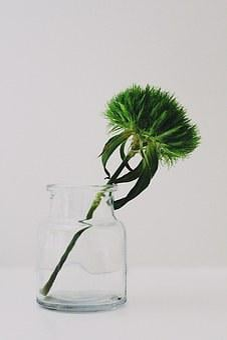 Sweet William, Green Beard Carnation