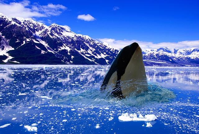 polar ice winter 183 free photo on pixabay