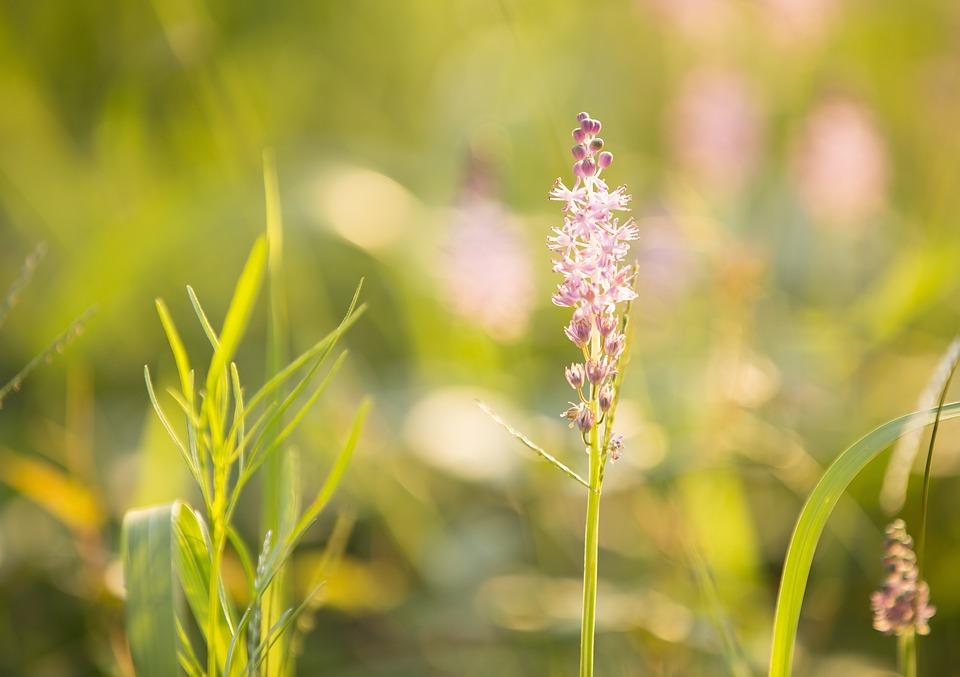 Grass flower flower inspiration for Grass flower