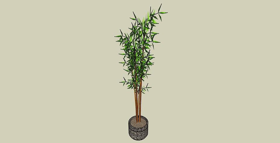 Plantes De Maison Accueil Image Gratuite Sur Pixabay