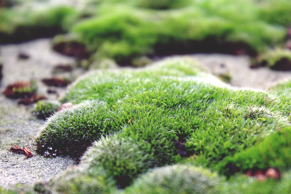 Free photo moss ground stone floor green free image for Green floor plant