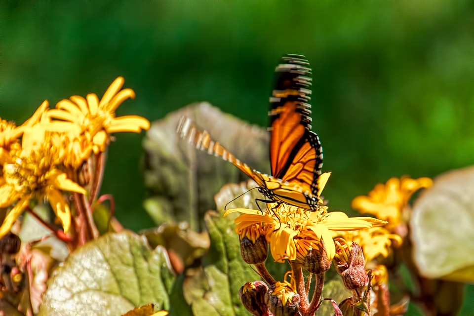Butterfly Garden Nature , Free photo on Pixabay