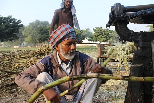 Sugar Cane, Man, Machine, Punjab