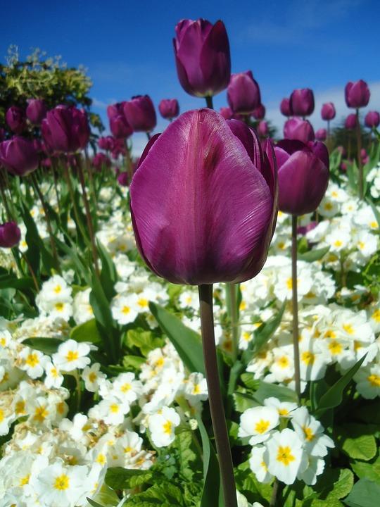 Цветы Пейзаж Трава Изображения Pixabay Скачать бесплатные