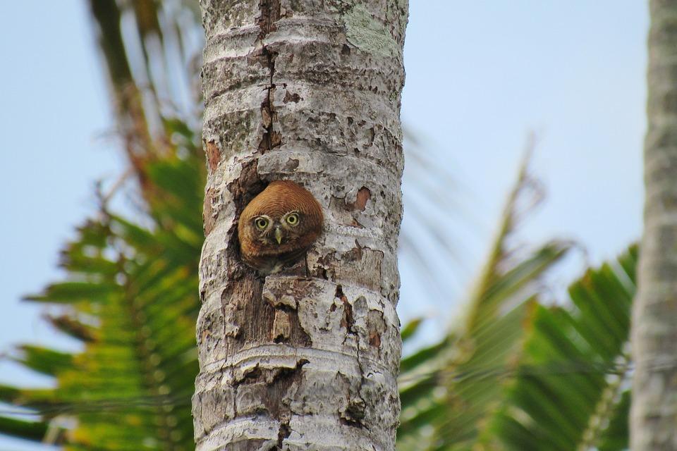 108+ Foto Gambar Burung Hantu Langka HD Paling Keren Free