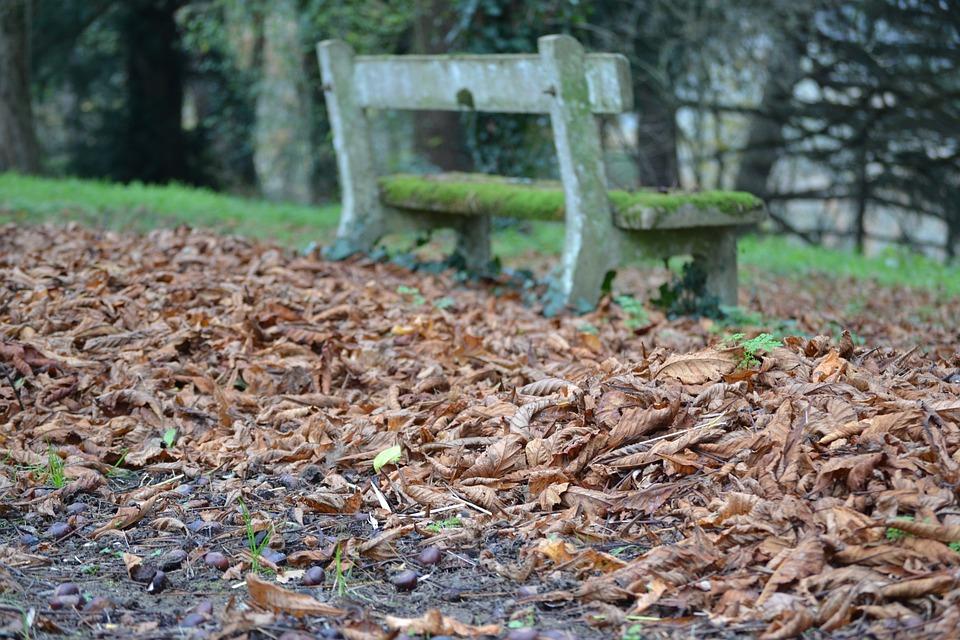 秋の葉, 秋, 葉, 葉のカーペット, 秋の風景, 紅葉, 枯れ葉