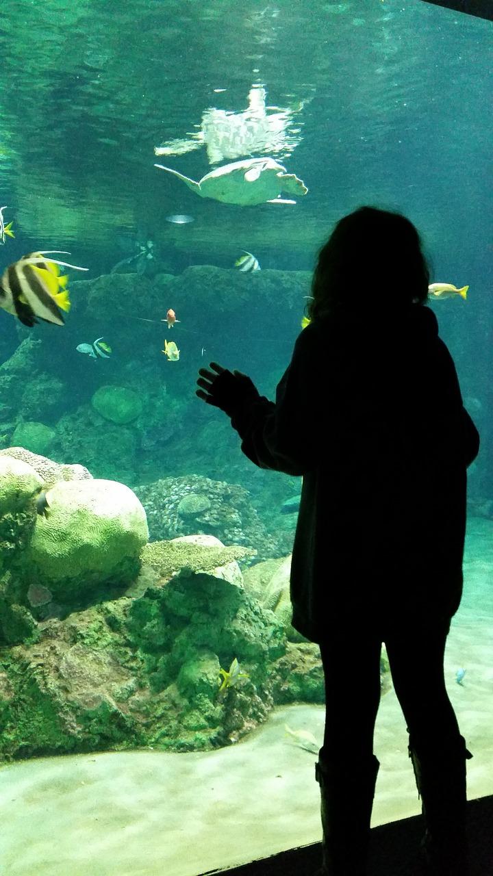 水族馆,女孩,鱼,寻找,白日梦,游泳,水下,海,鱼缸,生物学