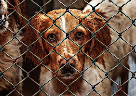 Animal Welfare Dog Imprisoned Animal Shelt