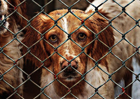 Animal Welfare, Dog, Imprisoned