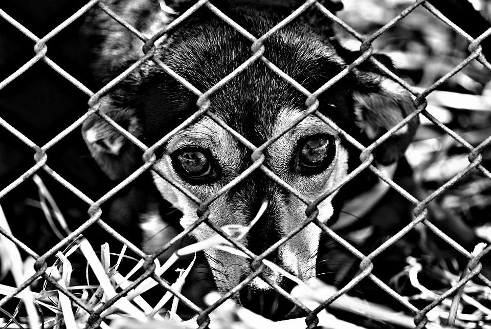 Animal Welfare Dog Imprisoned 183 Free Photo On Pixabay