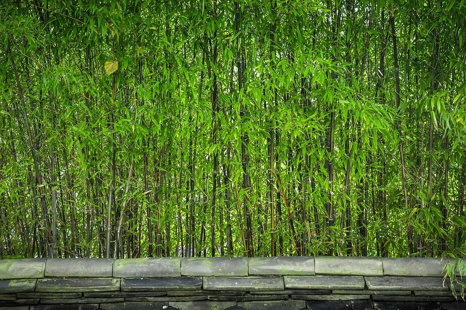 Bambu Madeira Plantas · Foto gratuita no Pixabay