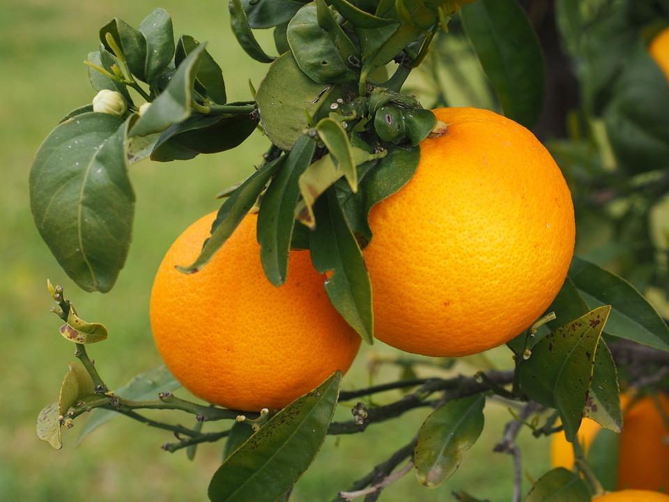 photo gratuite orange fruits oranger agrumes image gratuite sur pixabay 1117481. Black Bedroom Furniture Sets. Home Design Ideas