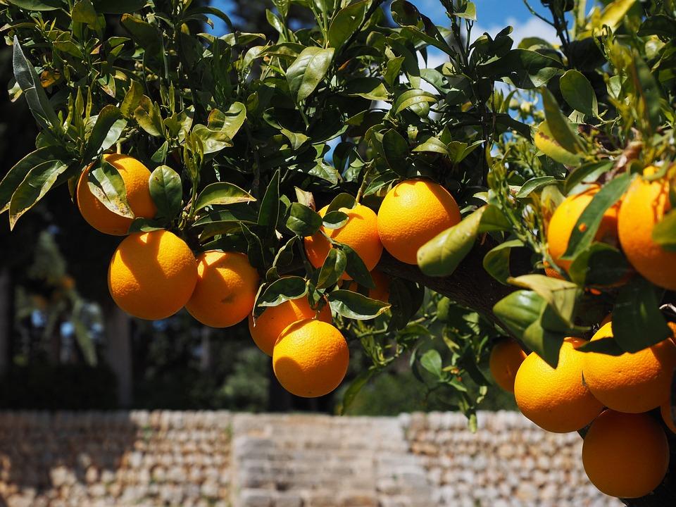 Ağacın Meyvesi Olunca Başını Aşağı Salar Atasözünün Anlamı