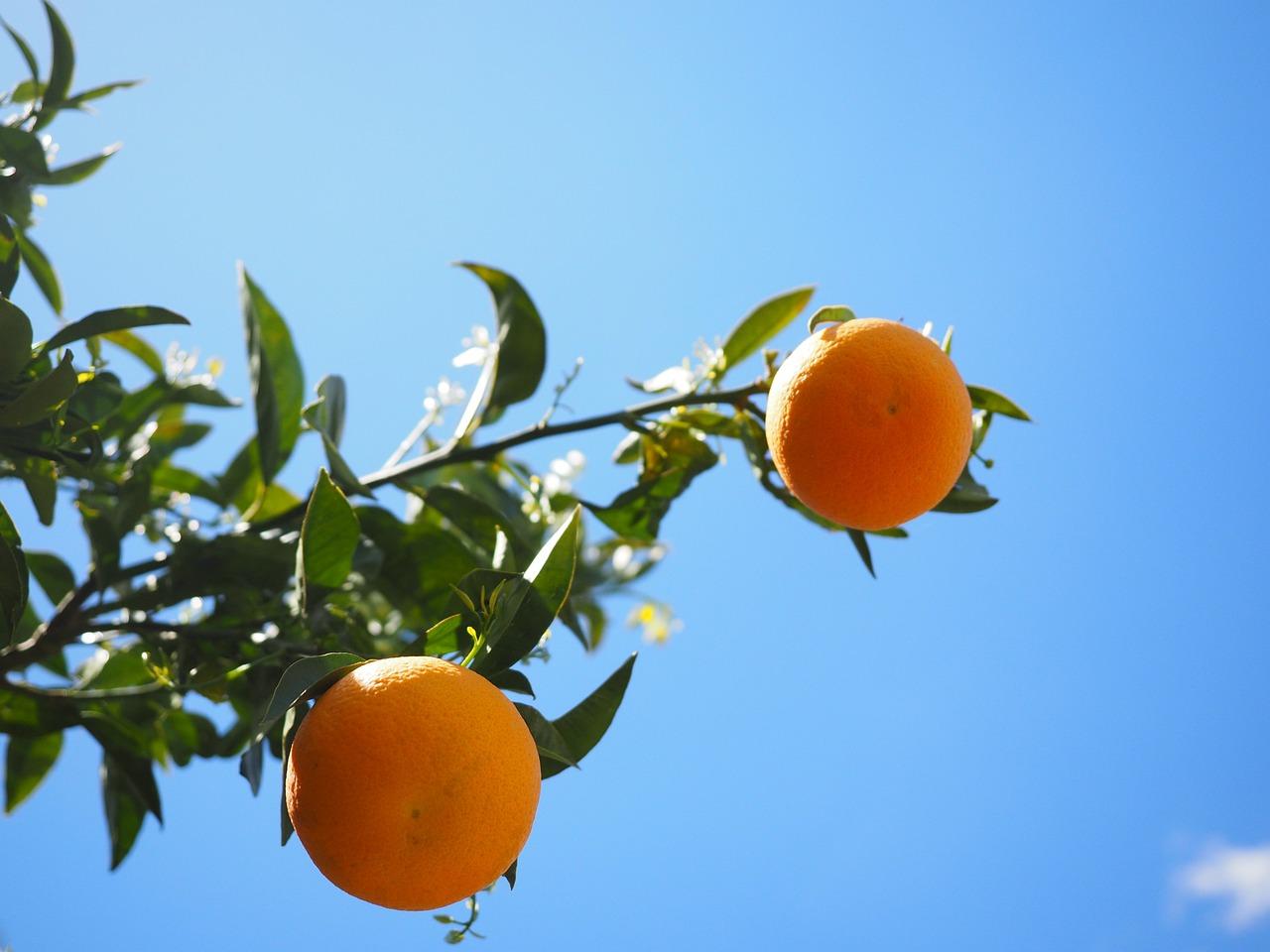 Приснилось что словала с дерева огромный апельсин
