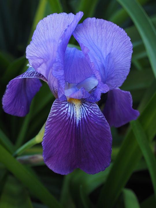 photo iris