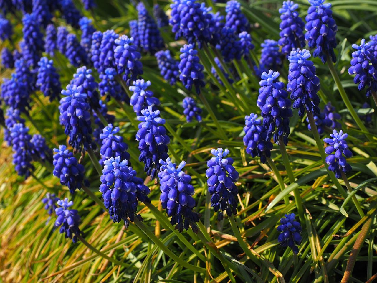 как картинка синенькие цветы советское время