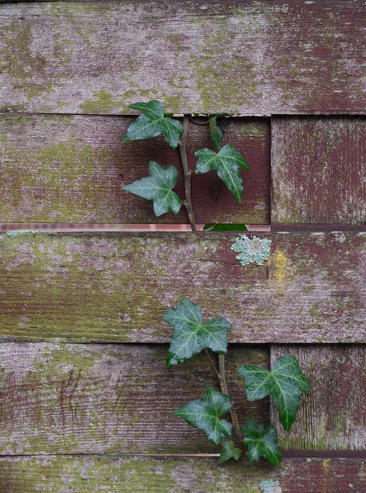 Kostenloses foto: geflochtenen zaun, hintergrund   kostenloses ...