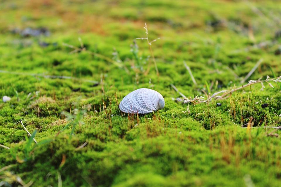 Muschel Moos Boden Kostenloses Foto Auf Pixabay