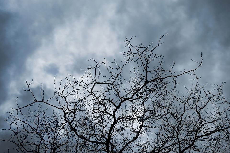 arbre ciel bleu temps nuageux - Arbre Ciel