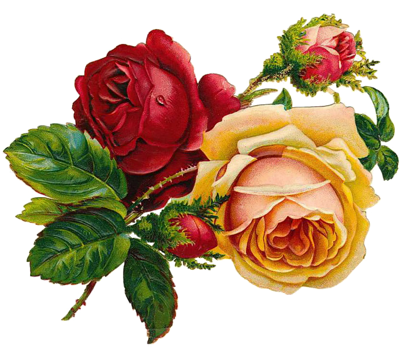 free clipart roses flowers - photo #50
