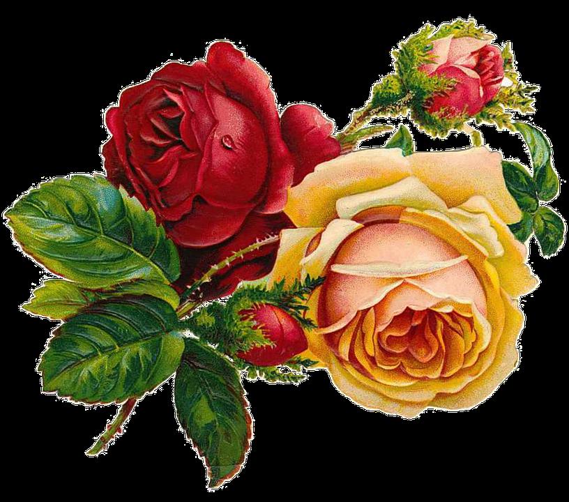 Flower Roses Pinterest: Roses Vintage · Free Image On Pixabay