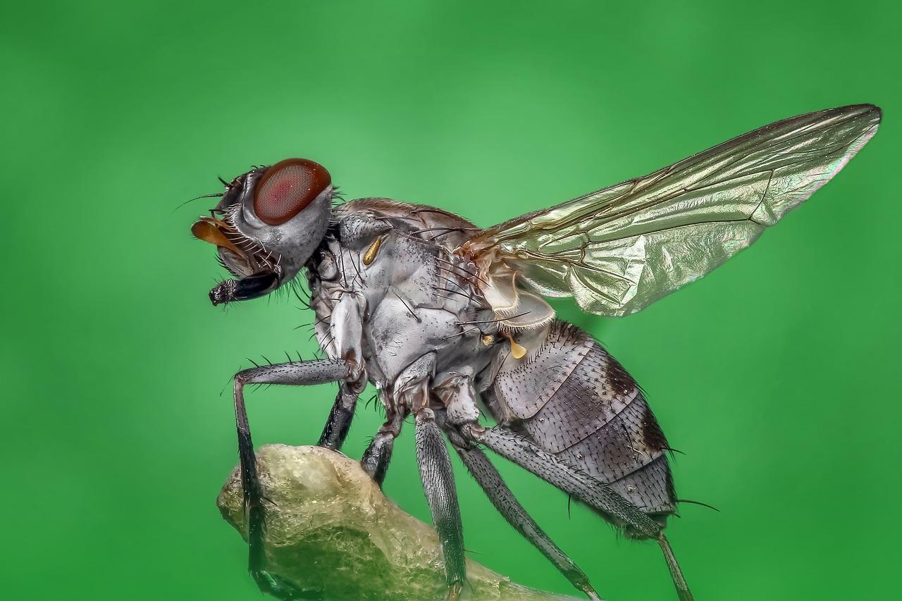 Lalat Terbang Makro - Foto gratis di Pixabay