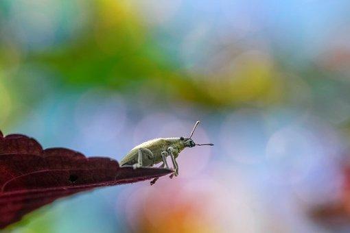 nature free images on pixabay