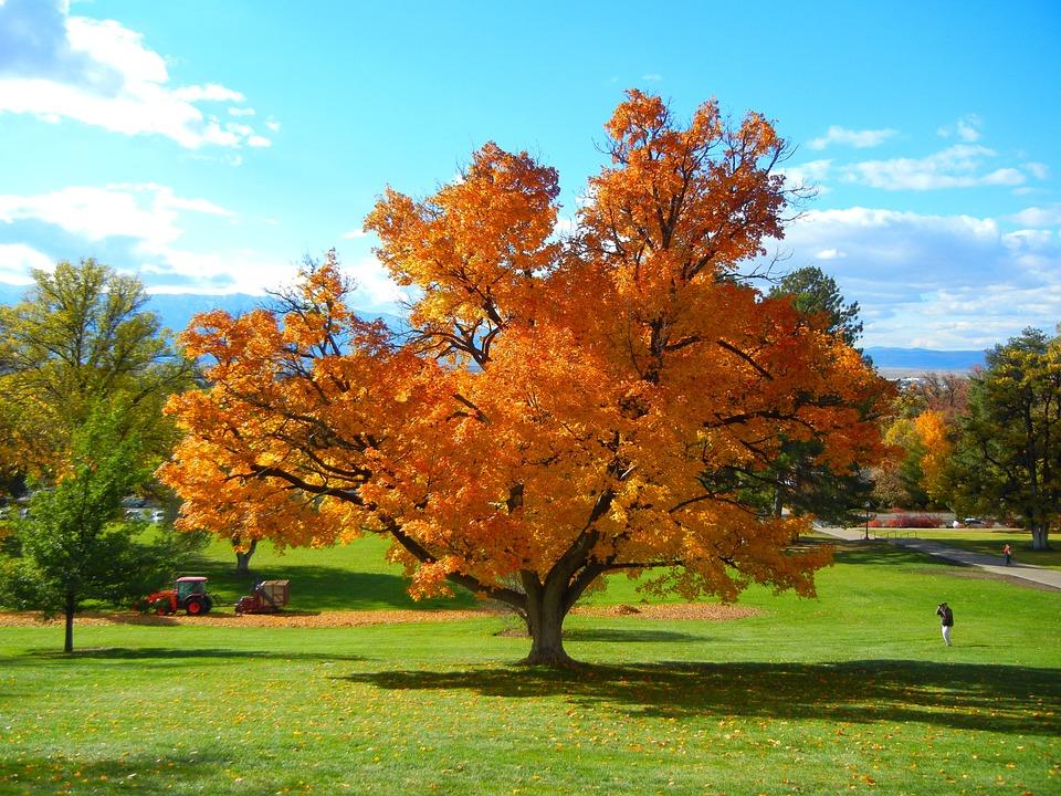 Caída De árboles Otoño Naturaleza Foto Gratis En Pixabay
