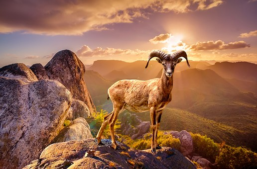 Wildlife, Animal, Rocks, Mountain