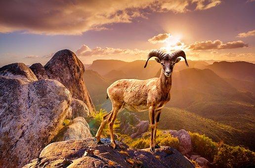 Wildlife, Animal, Rocks, Mountain