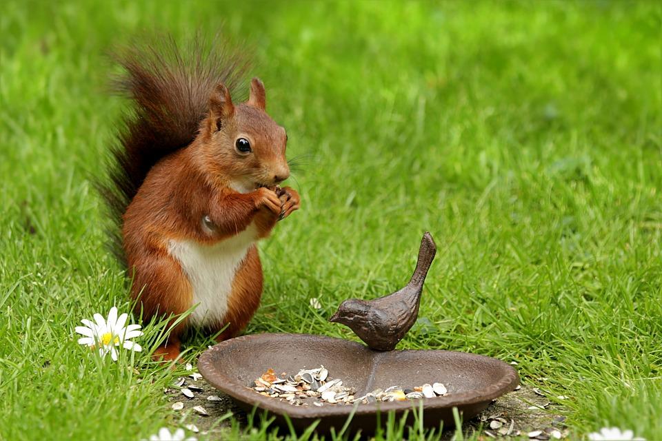 Photo gratuite cureuil des animaux sciurus image for Images du printemps gratuites